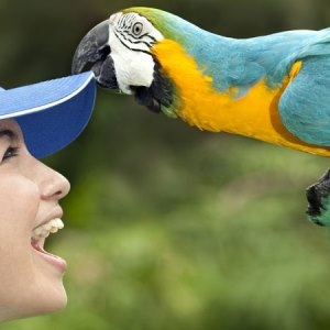 Visit the Bali Bird Park and Reptile Park